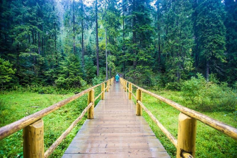 La femme de touristes vont par le pont en bois fait main au milieu de la forêt à travers la rivière sous la pluie dans la valise  photographie stock