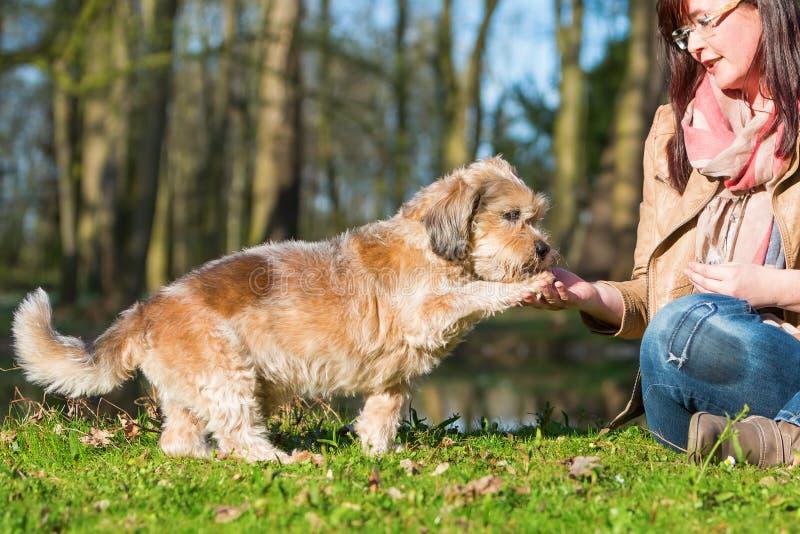 La femme donne à chien un festin et obtient la patte photos stock