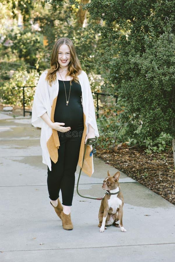 La femme enceinte marche son petit chien en parc sur Sunny Day photographie stock