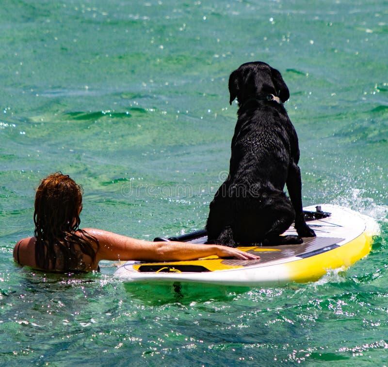 La femme enseigne à son chien comment surfer dans l'océan images libres de droits