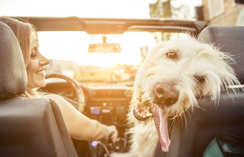 La femme et son labradoodle poursuivent l'entraînement avec la voiture images libres de droits