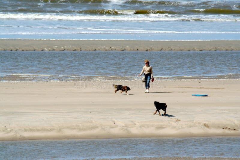 La femme laisse des chiens sur la plage photos stock