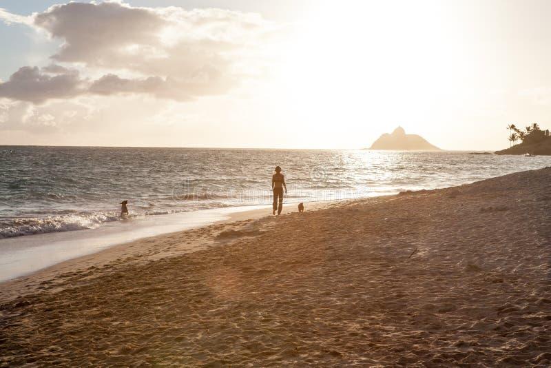 La femme marchant ses chiens en bas d'une plage tropicale s'est allumée par le soleil photographie stock libre de droits