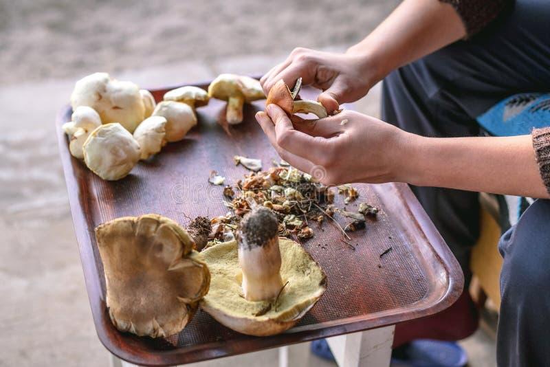 La femme nettoie a fraîchement sélectionné des champignons de forêt appelés Suillus images stock