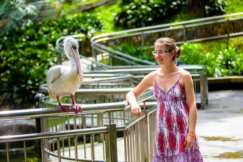 La femme parle au pélican en parc d'oiseau images stock
