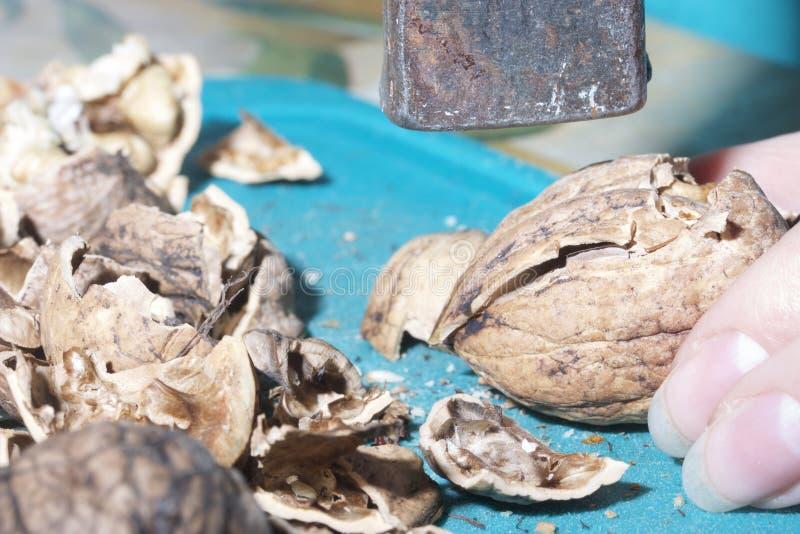 La femme poignarde des noix avec un marteau image stock