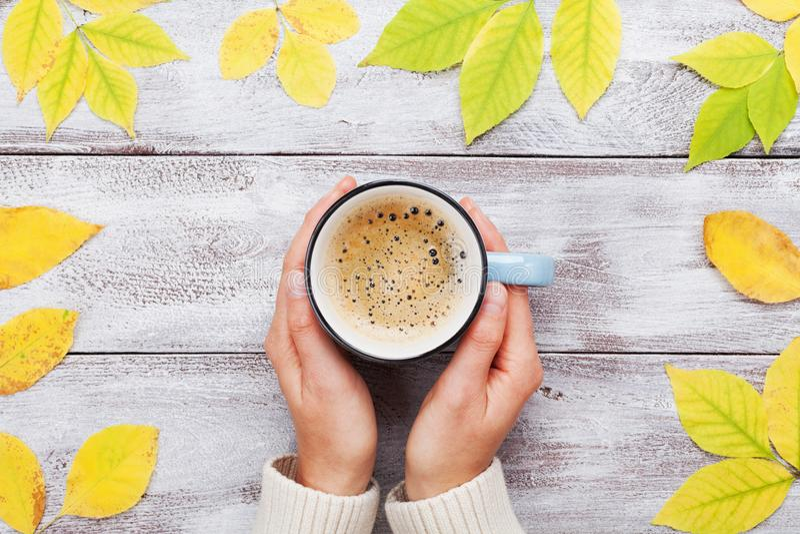 La femme remet tenir la tasse de matin de café sur la vue supérieure décorée par table en bois de feuilles de jaune d'automne de  images stock