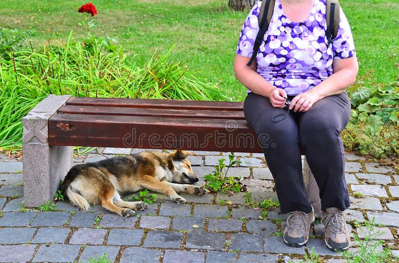 La femme s'assied sur un banc de parc avec un chien photos libres de droits