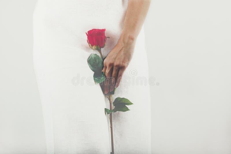 La femme s'est habillée dans la robe blanche tenant une rose rouge photo stock