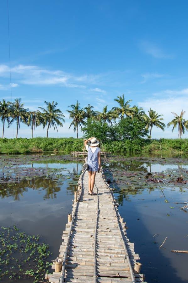 La femme sur le pont en bambou à l'arrière-plan d'étang de lotus et photo stock