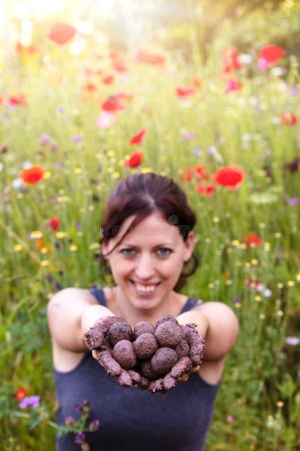 La femme tient les boules produites fraîches de graine ou les bombes de graine photo stock