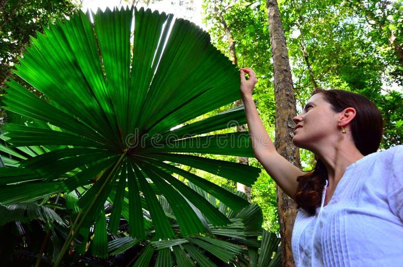 La femme touche une feuille de palmier dans l'Australie du Queensland image libre de droits