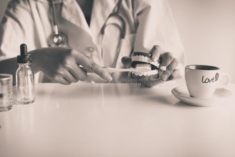 La femmina del dentista diagnostica i modelli di plastica con lo spazzolino da denti, concetto dei denti di controllo dentario, p fotografia stock libera da diritti