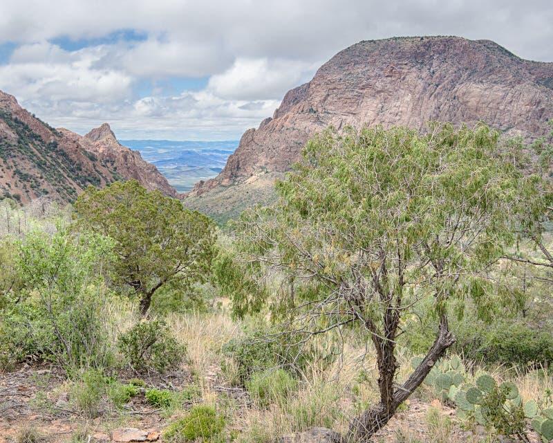 La fenêtre, bassin de montagnes de Chisos, parc national de grande courbure, TX photos stock