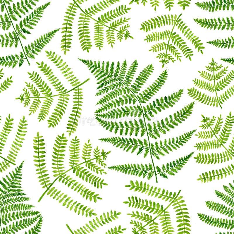 La fermata verde di colore d'acqua lascia un motivo senza soluzione di continuità Fotografia botanica disegnata a mano isolata su illustrazione vettoriale