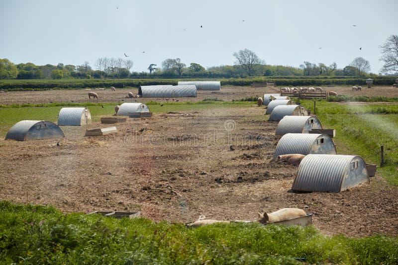 La ferme de porc en Devon l'angleterre photo stock