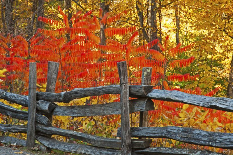 La ferrovia spaccata recinta i colori di caduta nello Smokies fotografia stock