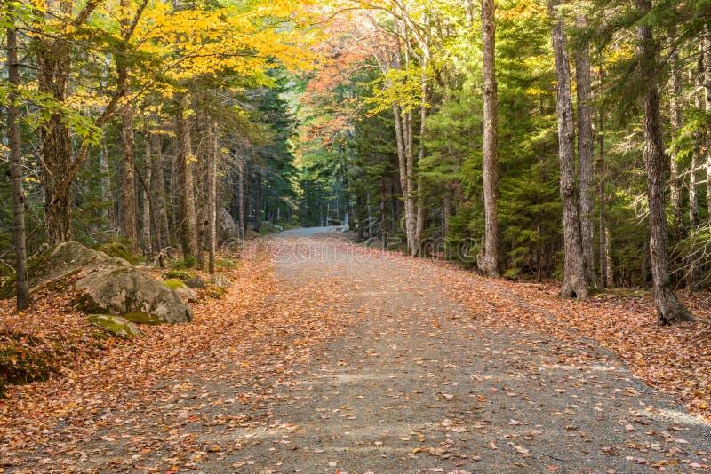 La feuille a couvert la route de chariot dans l'Acadia images libres de droits