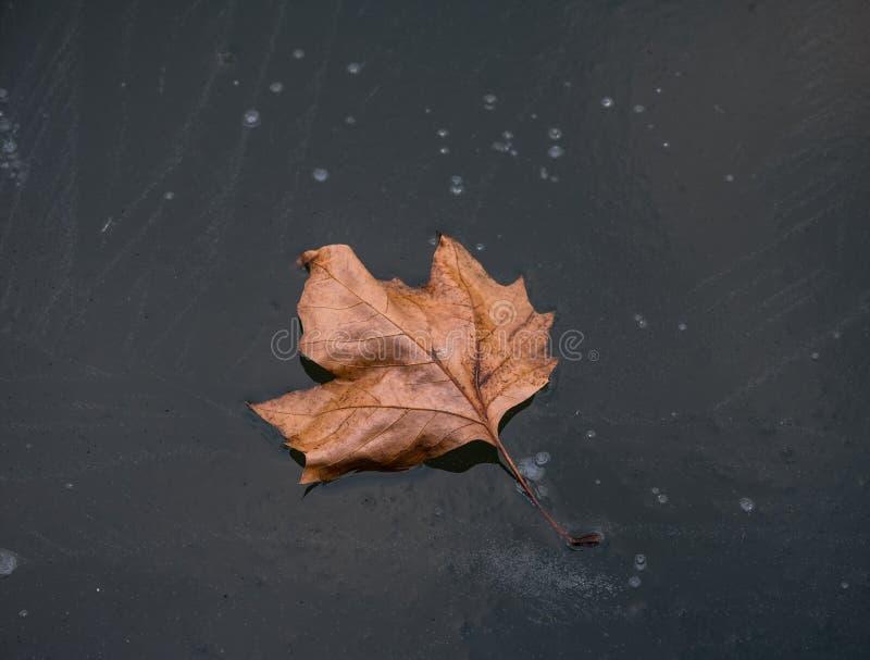 La feuille d'automne sur la glace de l'étang photo stock