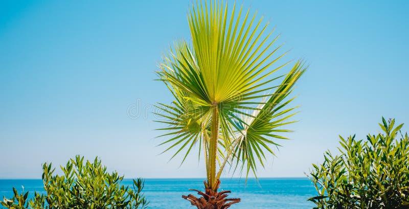 La feuille du palmier vert sur le fond de ciel bleu et de mer Horizontal tropical image stock