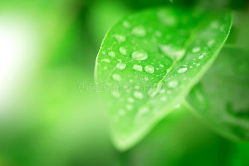 la feuille et l'eau vertes fraîches se laissent tomber en nature image stock