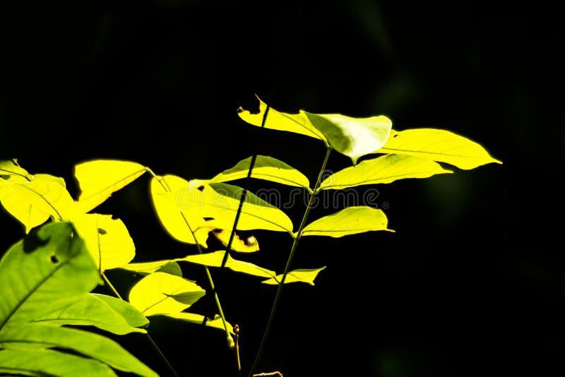 La feuille jaune photos stock