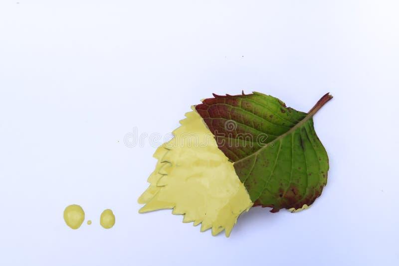 La feuille a plongé dans la peinture jaune illustration de vecteur