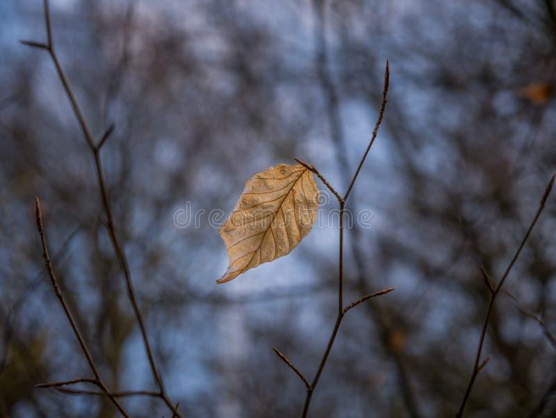 La feuille sèche d'automne dans une forêt image libre de droits