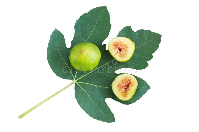 La figue mûre porte des fruits sur la feuille verte du figuier Configuration plate, d'isolement photos stock