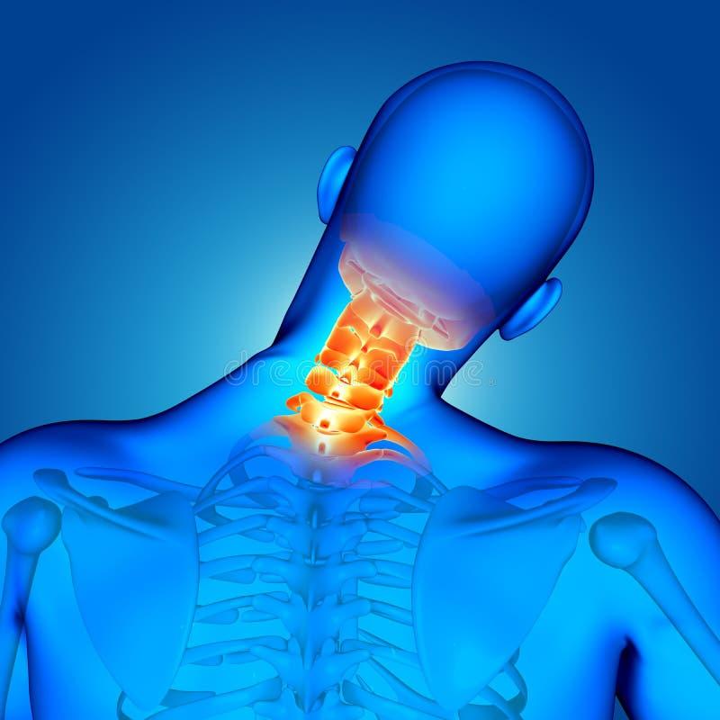 la figura masculina médica 3D con los huesos de cuello destacó libre illustration