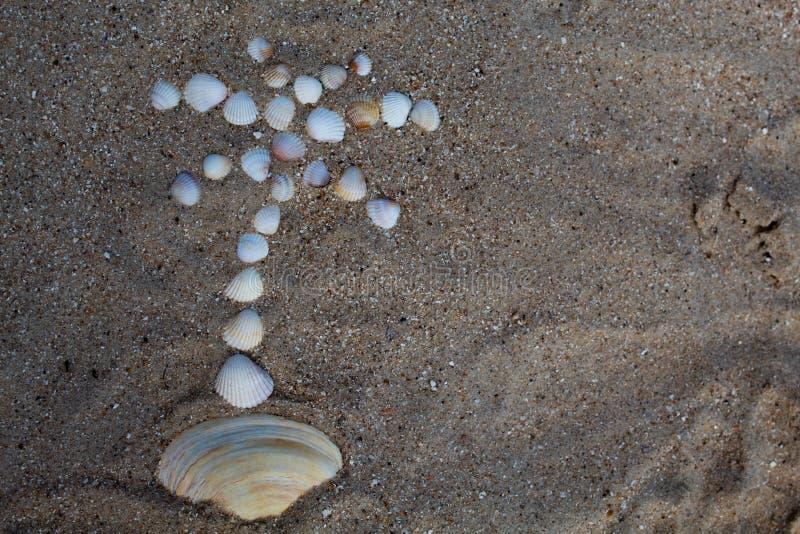 La figure d'un palmier est présentée sur le sable avec des coquilles photos stock
