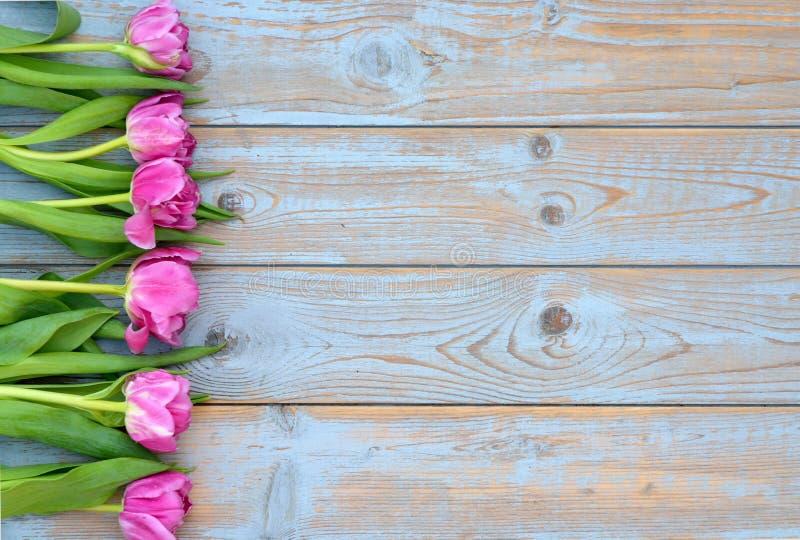 La fila dei tulipani rosa su un grey blu ha annodato il vecchio fondo di legno con la disposizione vuota dello spazio fotografia stock libera da diritti
