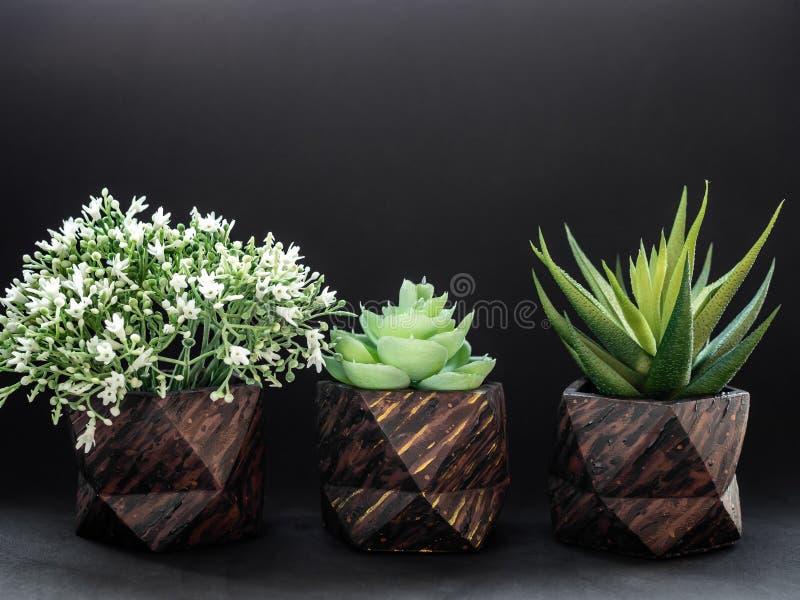 La fila del modelo de madera marrón tres pintó plantadores concretos geométricos con las plantas de la flor Potes concretos pinta imágenes de archivo libres de regalías