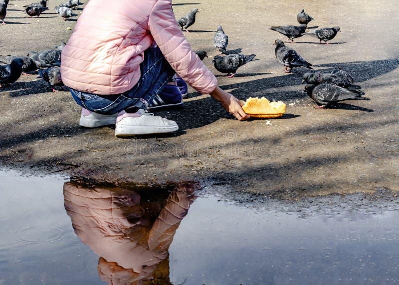 La fille a ?tir? sa main avec des miettes de pain et alimente les pigeons sur le trottoir, la fille dans la veste rose, jeans et photographie stock