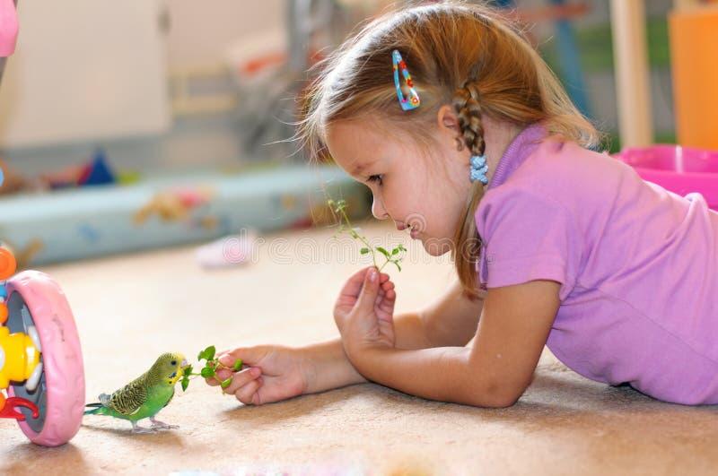 La fille alimente à perroquet l'herbe fraîche budgerigar image stock