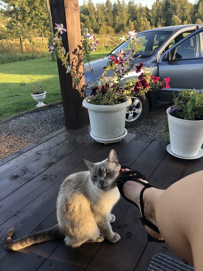 La fille après le travail s'est assis près de sa maison et admire le jardin, son chat frotte contre sa jambe et sourire-demande l image libre de droits