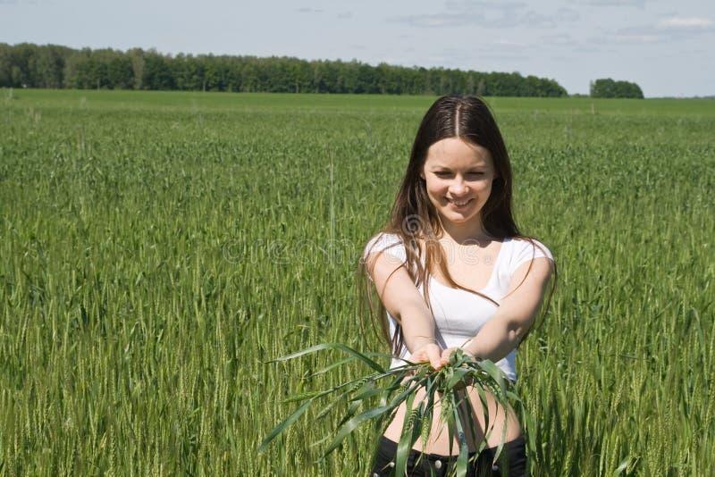 La fille dans le domaine avec des oreilles dans des mains image libre de droits