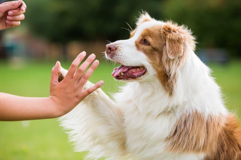 La fille donne une haute cinq de chien photos stock