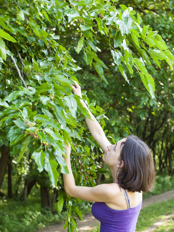 Download La Fille Mange Des Mûres De L'arbre Image stock - Image du jardin, branchement: 56475577