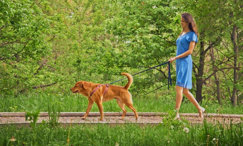 La fille marche avec le chien labrador retriever photo libre de droits