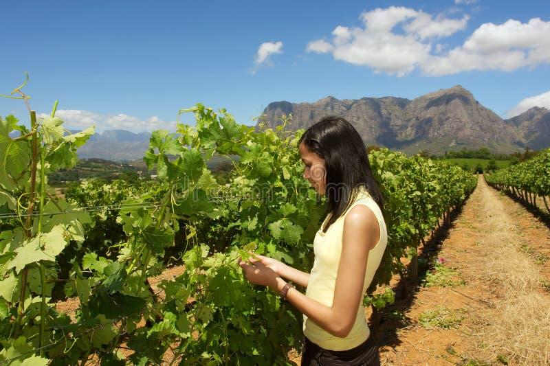 La fille mince de mulâtre examine la vigne image stock