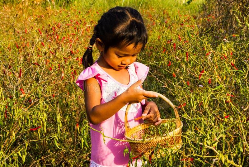 La fille prennent des piments. photo libre de droits