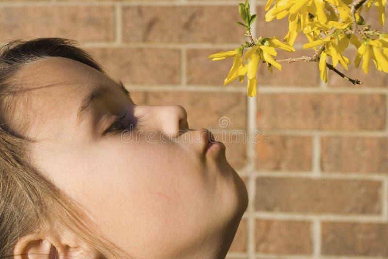 La fille sent des fleurs photo stock