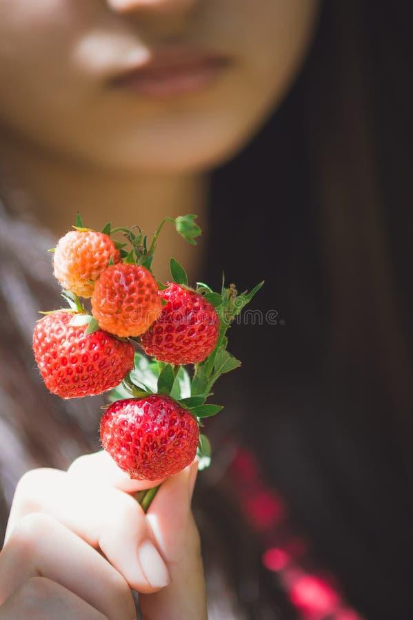 La fille tient des fraises dans des ses mains Plan rapproché, foyer sélectif image libre de droits