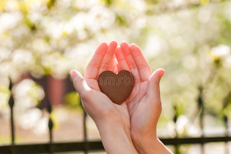 La fille tient le coeur dans des ses mains Coeur ? disposition Concept de donation saine, d'amour, d'organe, de donateur, d'espoi image libre de droits