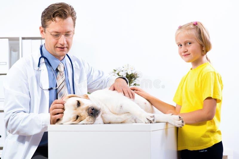 La fille tient un chien dans une clinique vétérinaire photos libres de droits