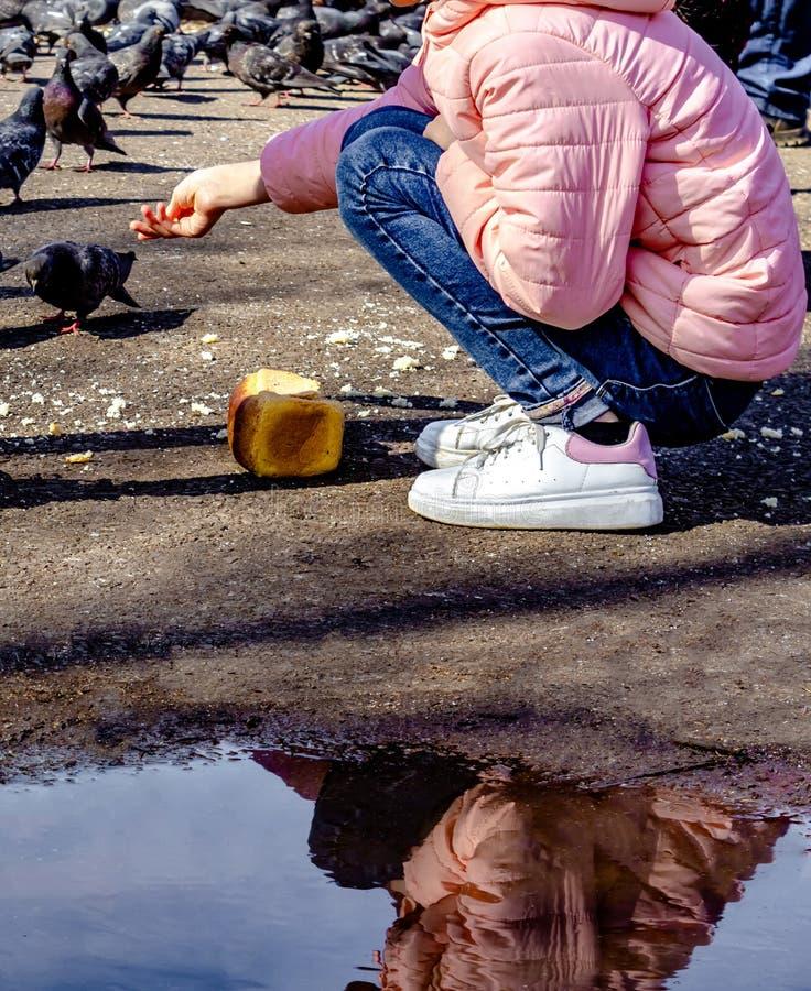 La fille a ?tir? sa main avec des miettes de pain et alimente les pigeons sur le trottoir, la fille dans la veste rose, jeans et image libre de droits