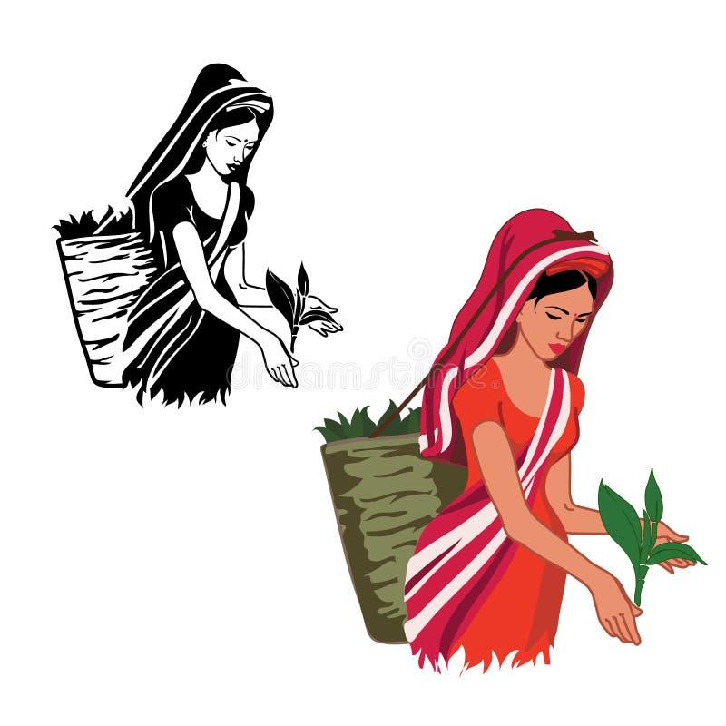 La fille travaille au thé de produit illustration de vecteur