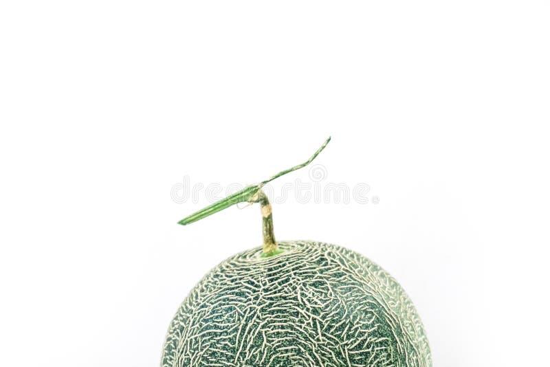 La fin abstraite de la texture de melon de cantaloup, se ferment vers le haut du cantaloup doux frais de melon de tranche sur la  image stock