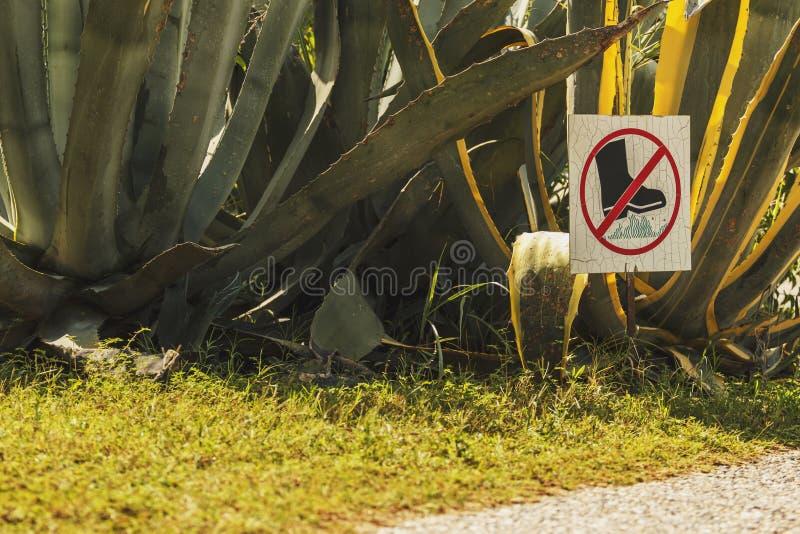 La fin de cactus, ne marchent pas sur la pelouse image stock